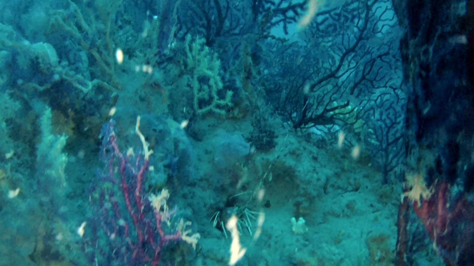 Mediterraneo: panorama sommerso mozzafiato – Mediterranean sea: underwater panorama breathtaking – intotheblue.it – vlcsnap-2019-03-12-16h01m25s202