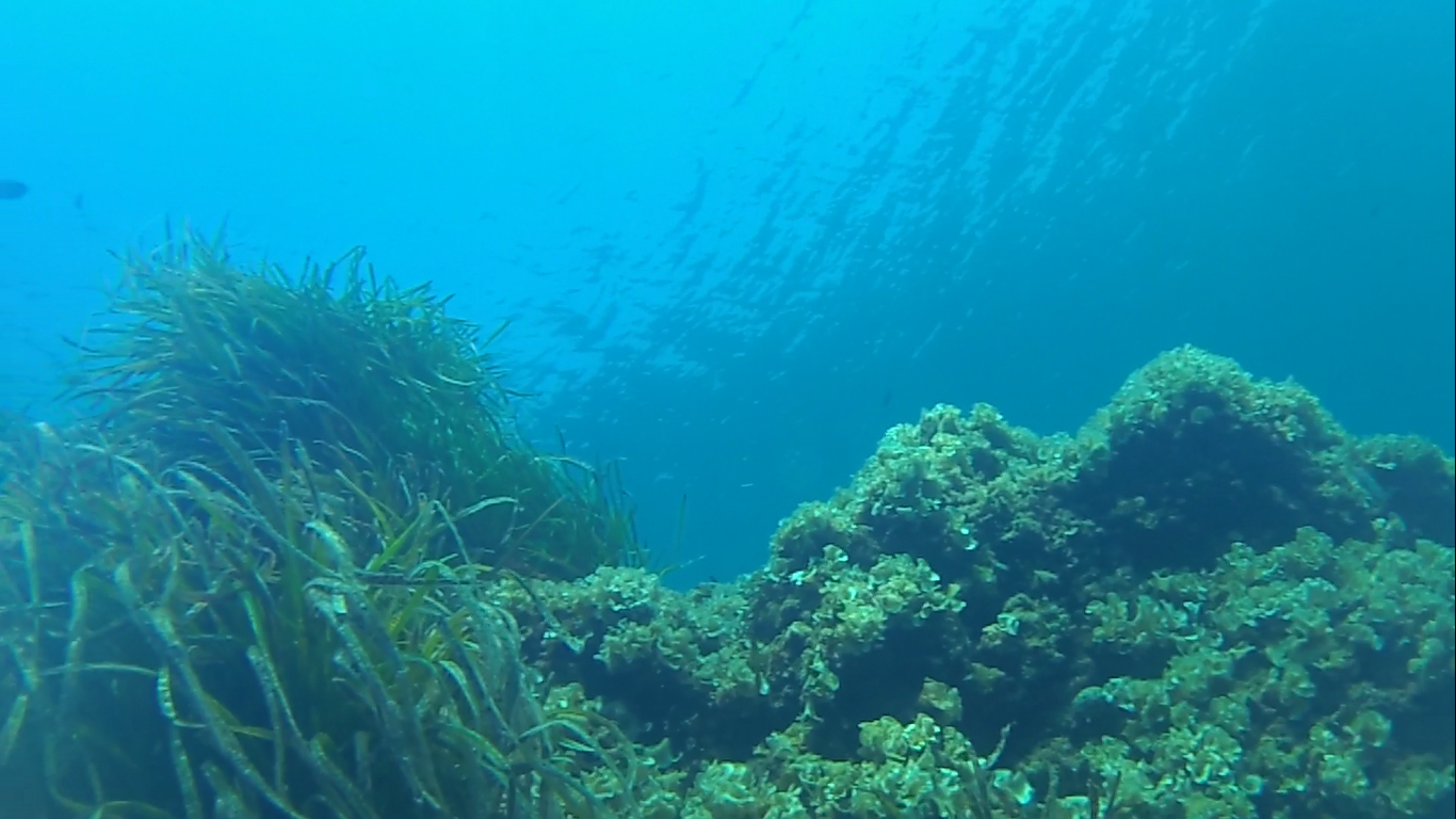 Posidonia oceanica - intotheblue.it